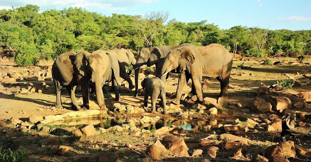 Answering FAQs About Makweti Safari Lodge