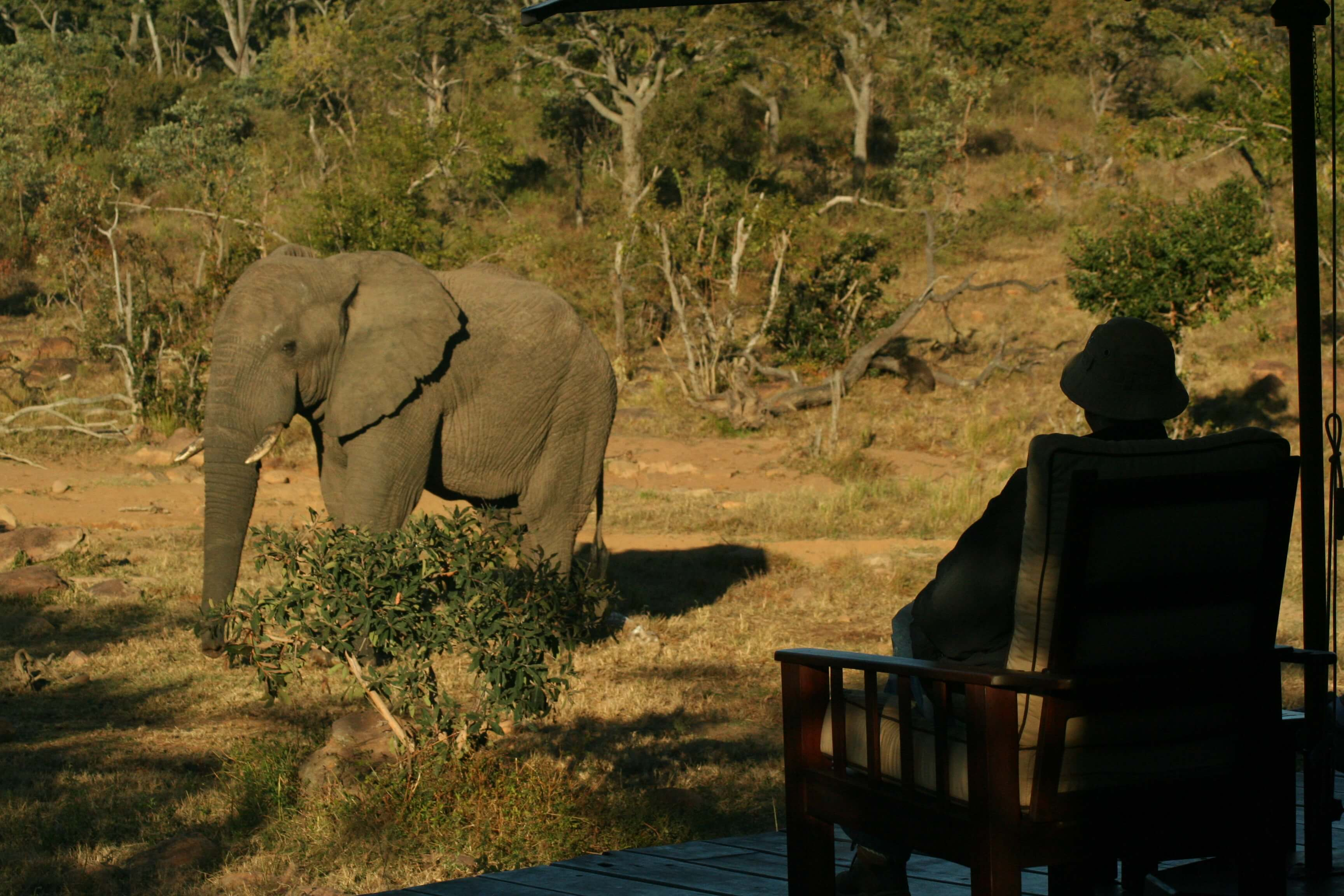 Making Guests Feel At Home – A Sample Of Makweti Guest Reviews