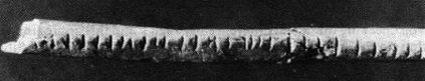 Lebombo Bone