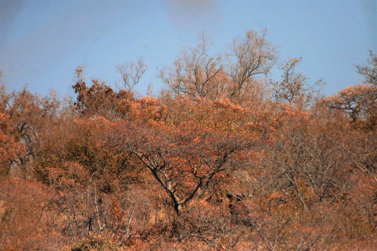 We nearly missed him on safari game drive - can you see?