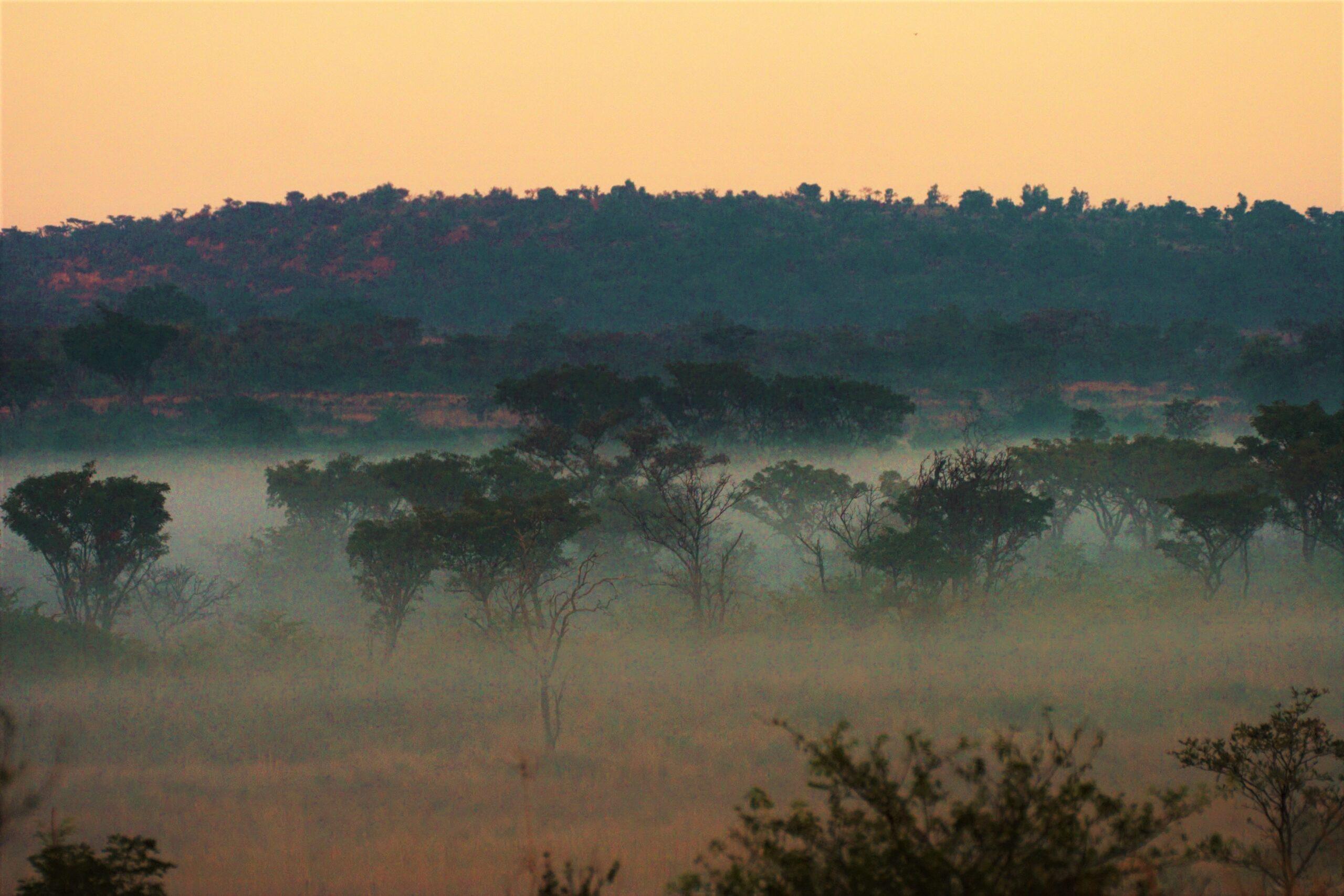 African Safari Welgevonden